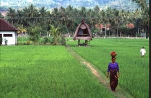 Indonesia - Bali - Lovina