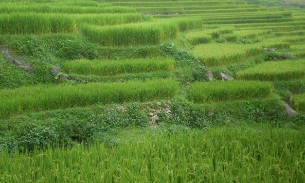 11/08/2009 – dal Vietnam