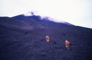 America Centrale - Guatemala - vulcano Pacaya