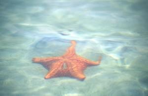 America Centrale - Panama - Bocas del Toro - Playa de las Estrellas