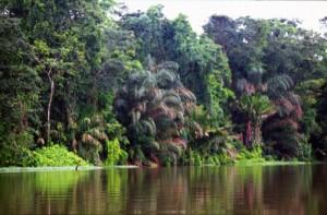 America Centrale - Costarica - Tortuguero - labirinto di fiumi
