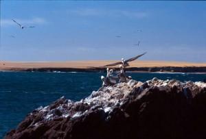Peru - Paracas - Isole Ballestas