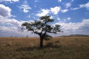 Tanzania - Serengeti - la savana