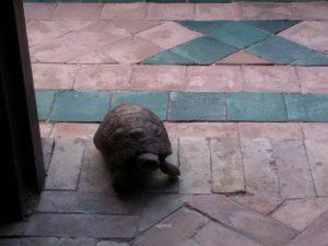Marocco - Marrakech - the turtle