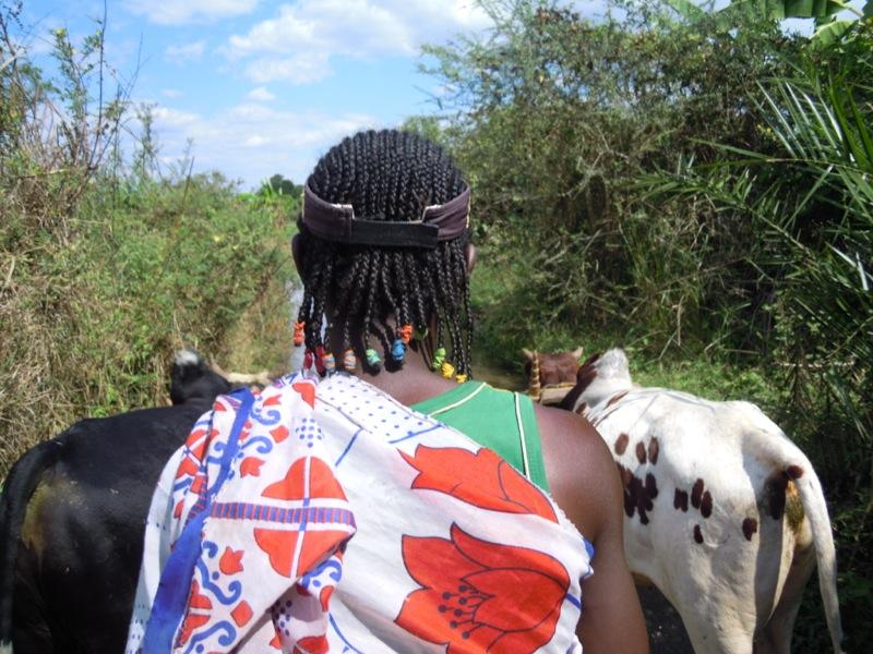 Madagascar -Moussa e carretto zebù