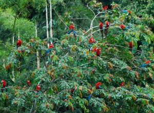 In partenza: Amazzonia…