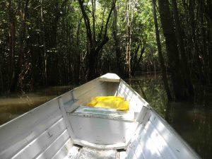 Inside forest... Rio Preto da Eva