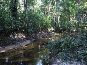 foresta colombiana