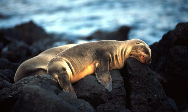 Galapagos – Ecuador 2013