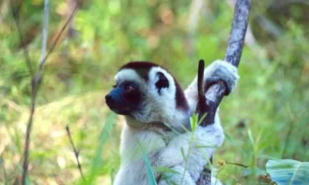 Madagascar 2011