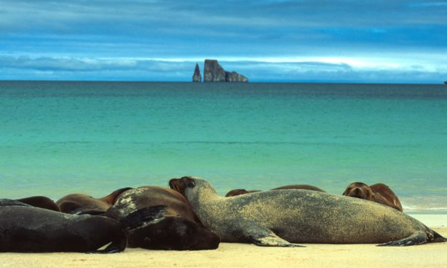 Immagini Galapagos Ecuador