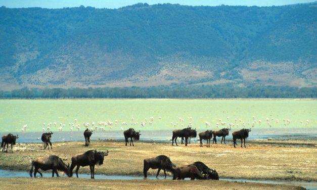 Kenya Tanzania 2007