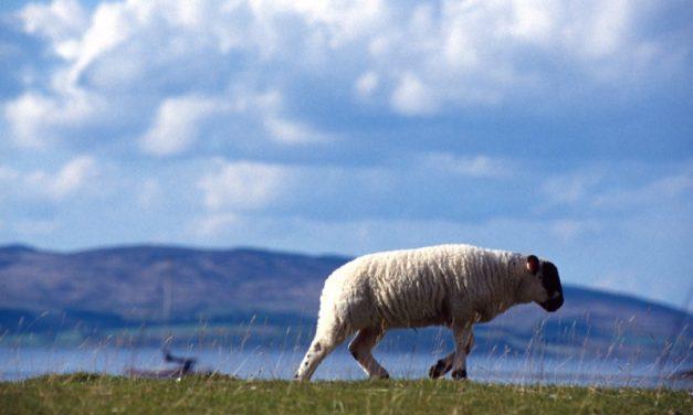 Scozia 2010 – diario, itinerario e fotografie