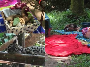 animals in jaguar rescue center puerto viejo costa rica 300x225 - The Panama Costa Rica border: the end and a new beginning!