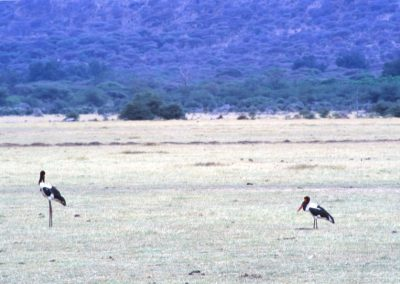 Big Birds - Lake Manyara National Park - Tanzania