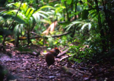 Biodiversity - Tortuguero National Park - Costa Rica, Central America