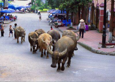 vietnam_i_31