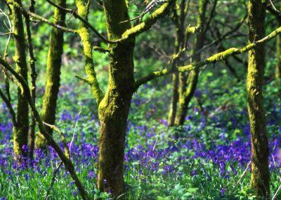 Fairy's wood - Wales