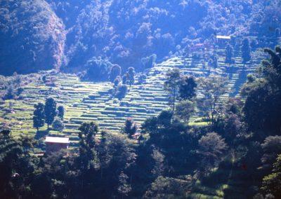 Fields of Rice at Sunset - Nepal