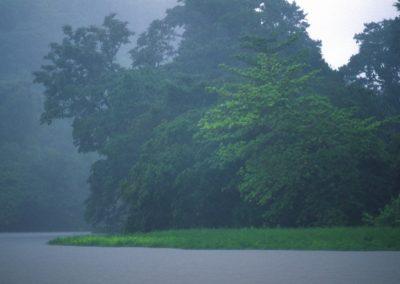 Fog - Tortuguero National Park - Costa Rica, Central America