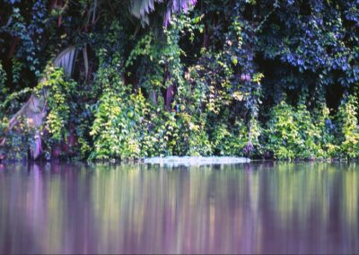 Forest from the River - Tortuguero National Park - Costa Rica, Central America