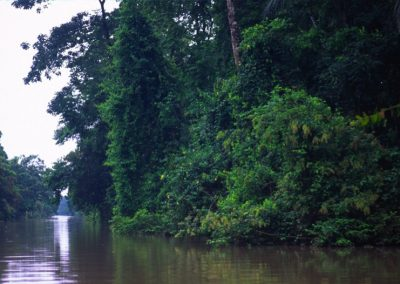 Forest - Tortuguero National Park - Costa Rica, Central America