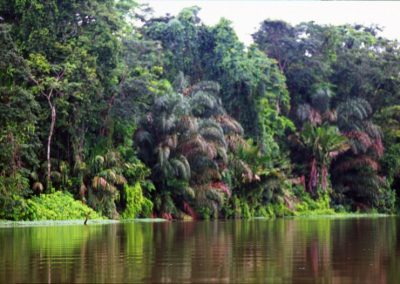 Impenetrable Forest - Tortuguero National Park - Costa Rica, Central America