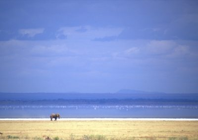 Lonely Elephant - Lake Manyara National Park - Tanzania