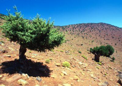 marocco_iiib_03_1