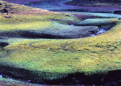 Nature - Ireland