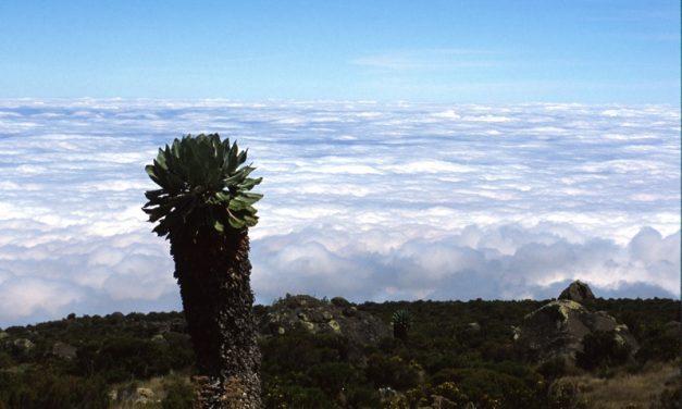 Immagini Tanzania Kilimanjaro