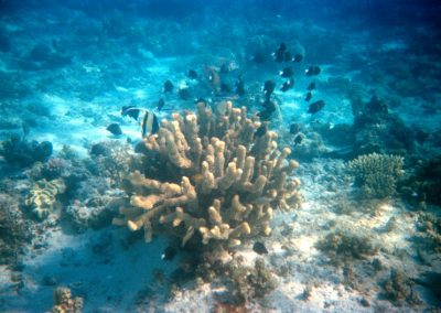 Snorkelling - Yellow Coral - Fiji, Samoa