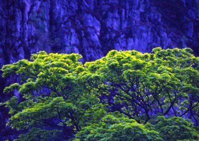 Tree near Mountain - Wales