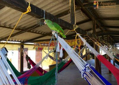 Hammock with parrot - La Guajira, Colombia