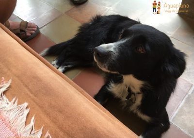 Lola - lost dog - Barichara, Colombia