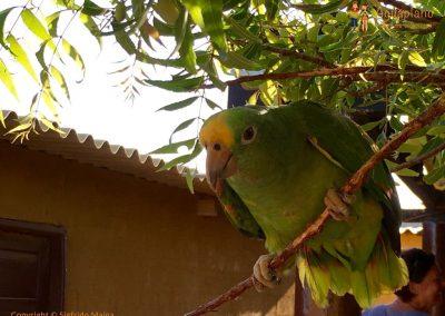 Parrot - La Guajira, Colombia