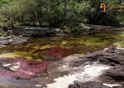 Red and Green River - Cano Cristales - La Macarena district, Colombia