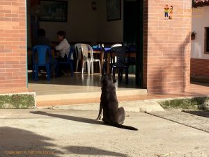waiting dog guadalupe colombia 300x226 - Colombia 2017