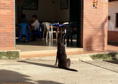 Waiting dog - Guadalupe, Colombia