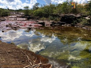white clouds in green and red cano cristales la macarena district colombia 300x225 - Colombia 2017