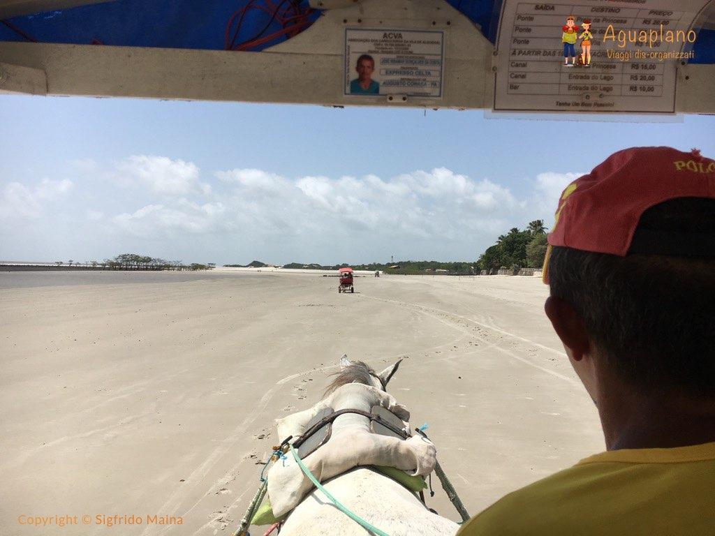 horse cart algodoal brazil - Algodoal, Brasile: un'isola incantata