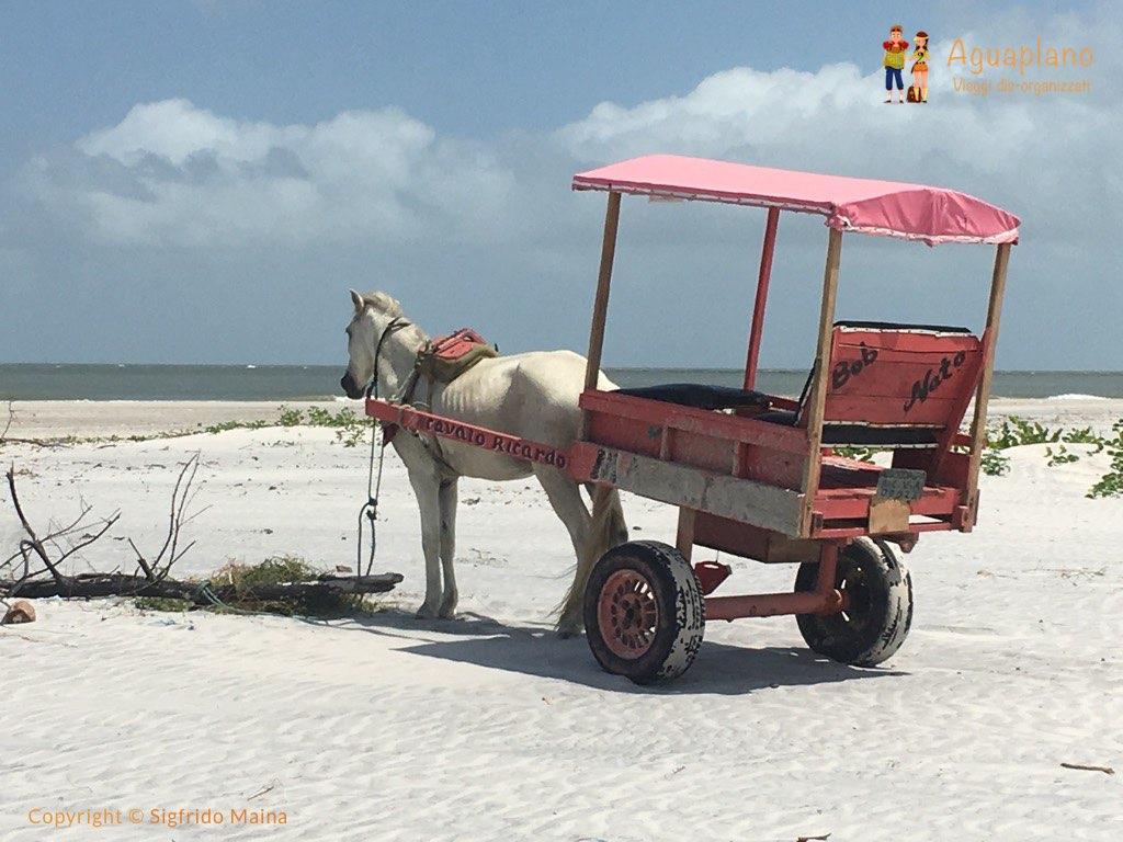 horse cart ricardo algodoal brazil - Algodoal, Brasile: un'isola incantata