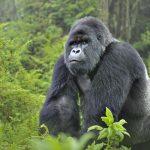 Female ranger killed, two British tourists kidnapped in Virunga NP